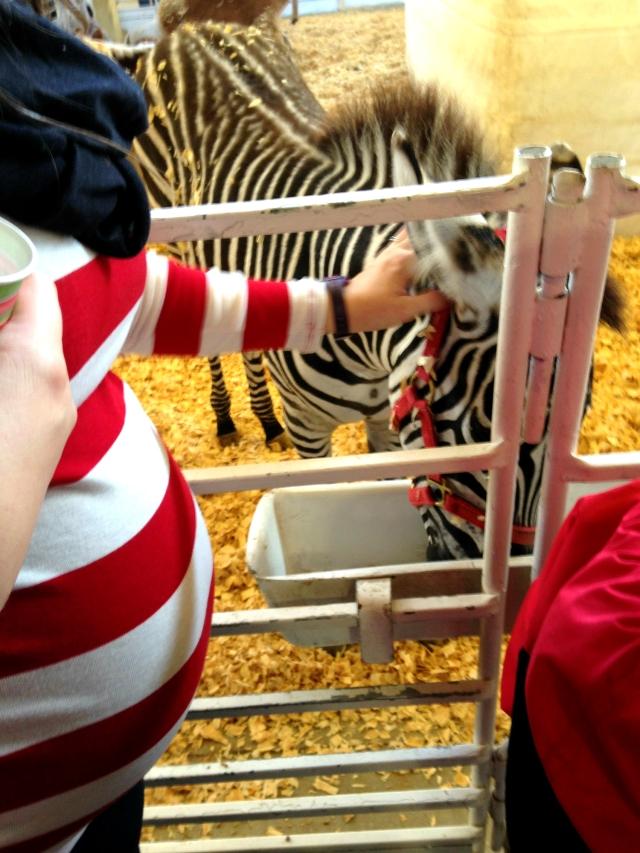 Grady and zebra